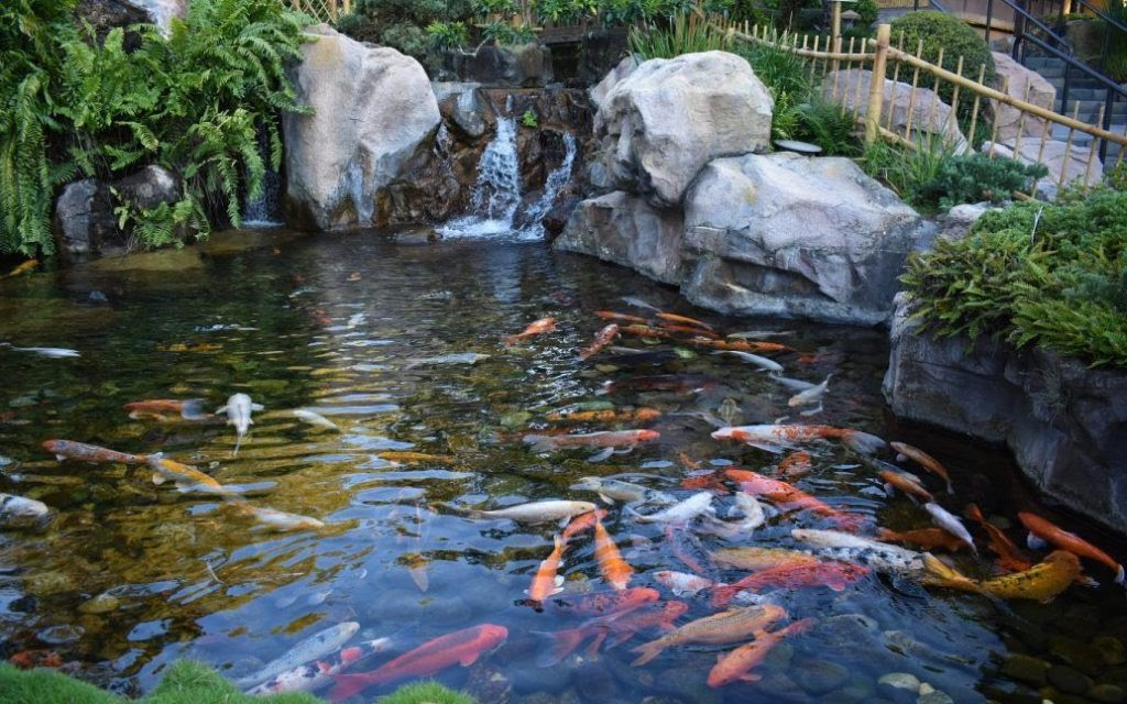outdoor Koi aquariums